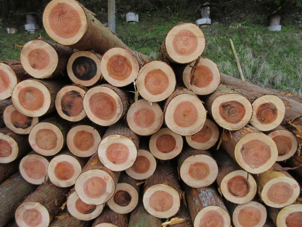 杉の杯積み